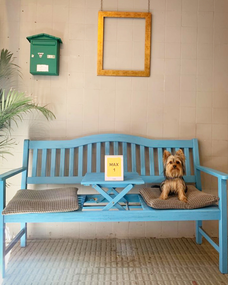 Perro sentado en un banco en la entrada de un es