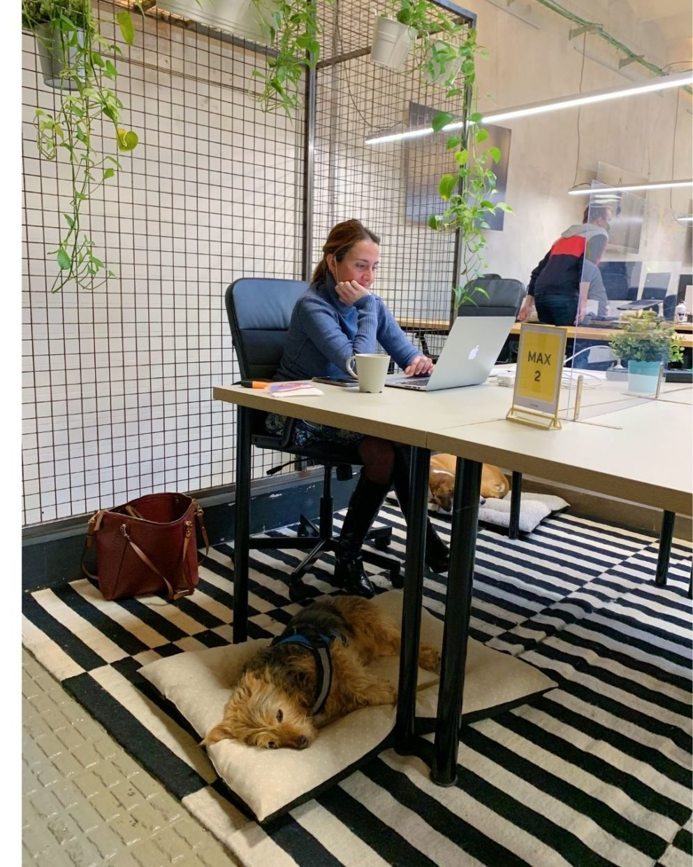 Woman working in a coworking space with her two dogs sleeping under the desk